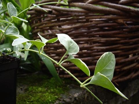 Planty2