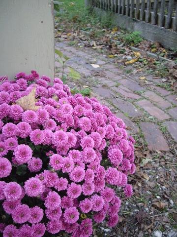 Purplemums